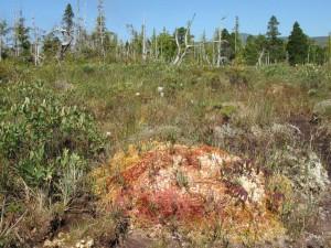 Ursprüngliche Wälder im Westen Kanadas; Bildquelle: http://www.wilderness-international.org/ medien/bilder/ naturschutzgebiet/