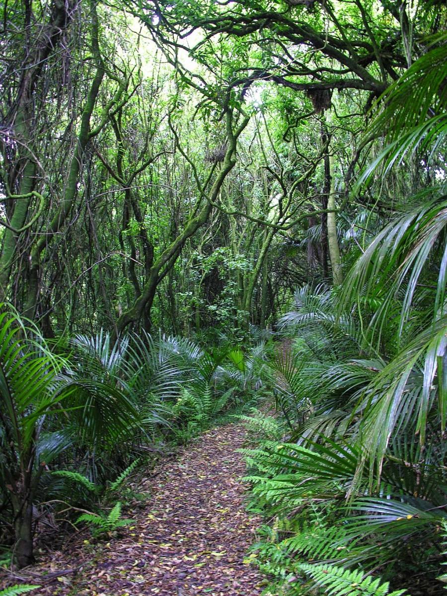 5 Im Regenwald