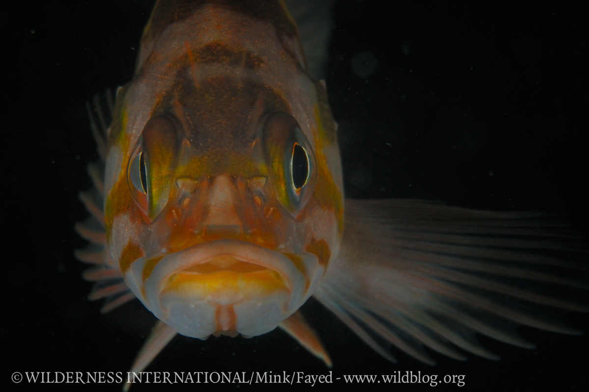 http://wi.wildblog.org/wp-content/uploads/2012/07/lr-5890.jpg