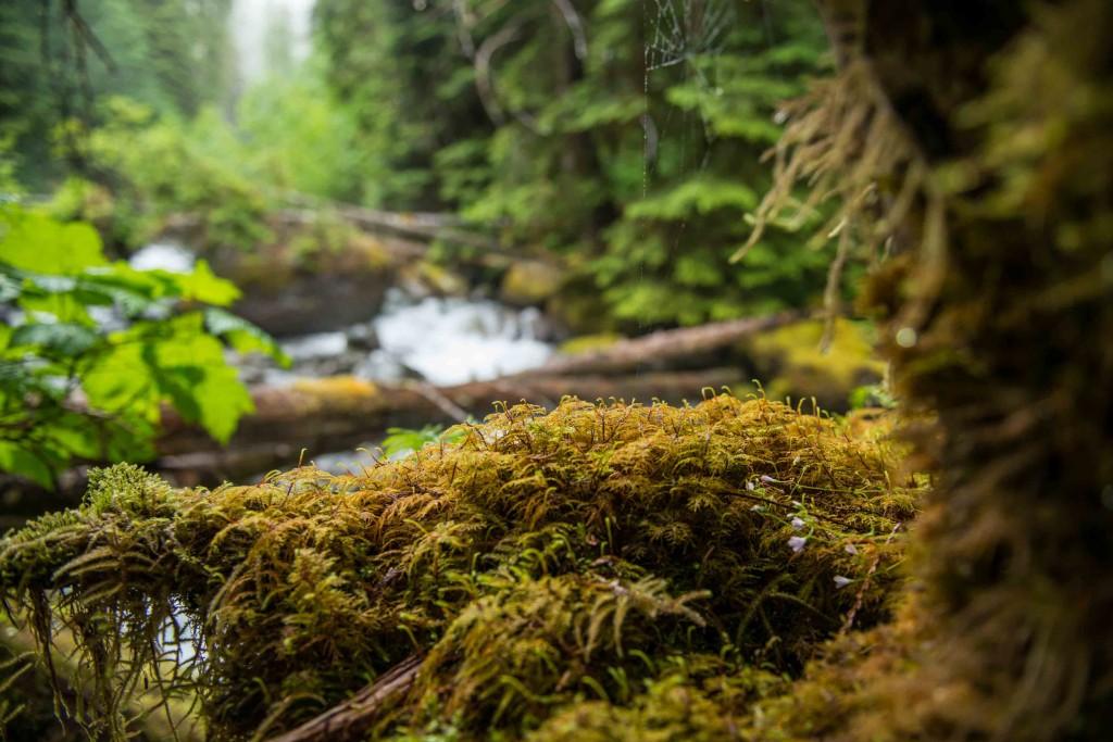 Wilderness International Kanadareise 2014
